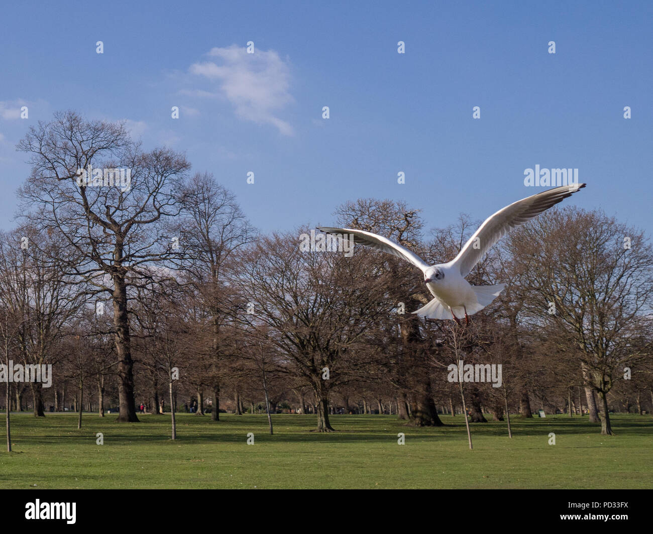 Street photography in London UK - Stock Image