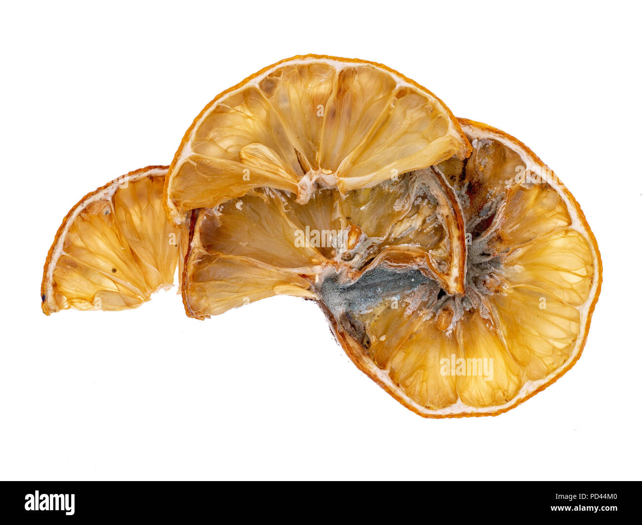 Lemon slices gone mouldy with mold. Beautiful natural decomposition. Isolated on a white background Stock Photo