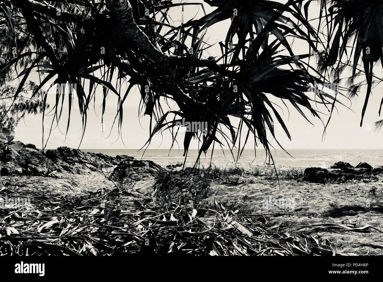 Pandanus leaves overhanging a tropical beach, Toomulla QLD, Australia - Stock Image