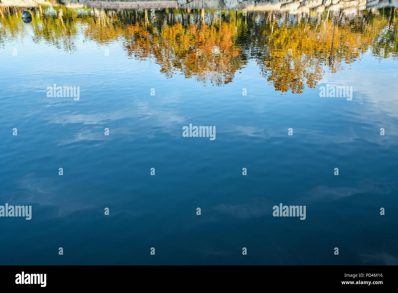 Upside down autumn trees with blue sky reflection in water. Stock Photo