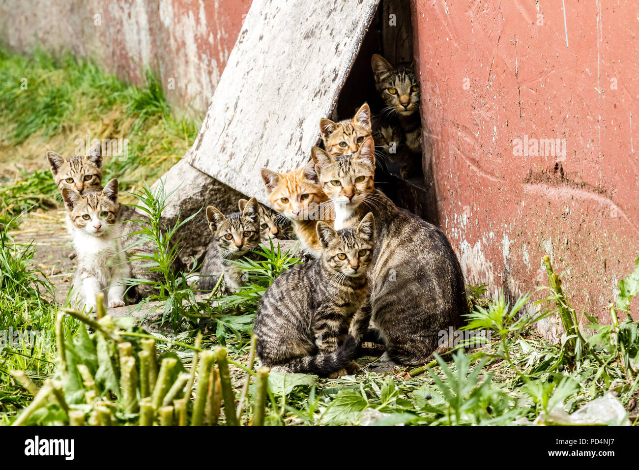 Large group of homeless kittens in a city street near the house - Stock Image