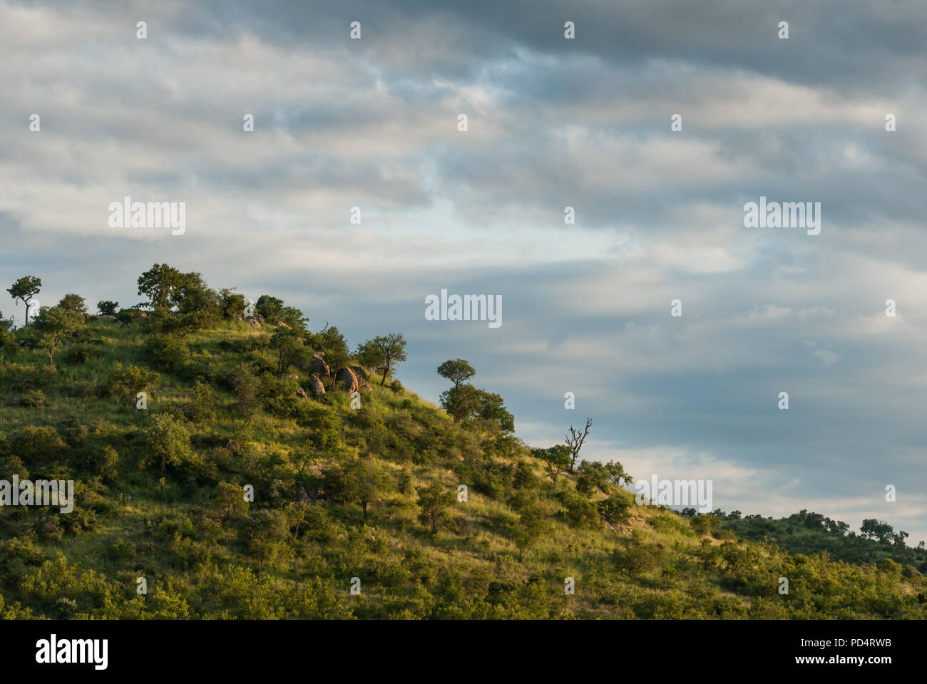 African bushveld hill in evening sun light with soft cloudy sky, space for text, South Africa - Stock Image