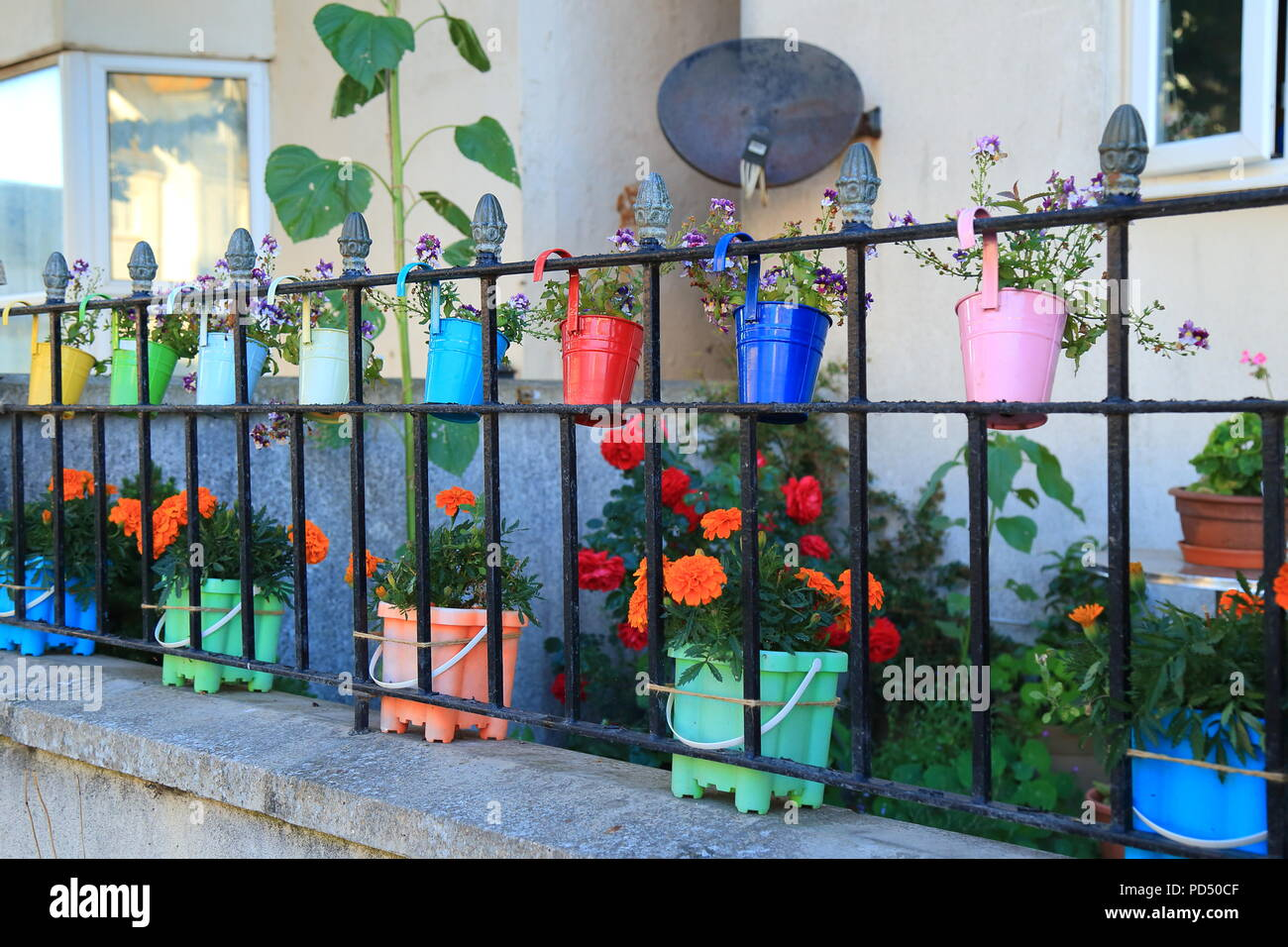 Row Of Very Colourful Garden Pots Displayed Around Metal Railings Fence    Stock Image