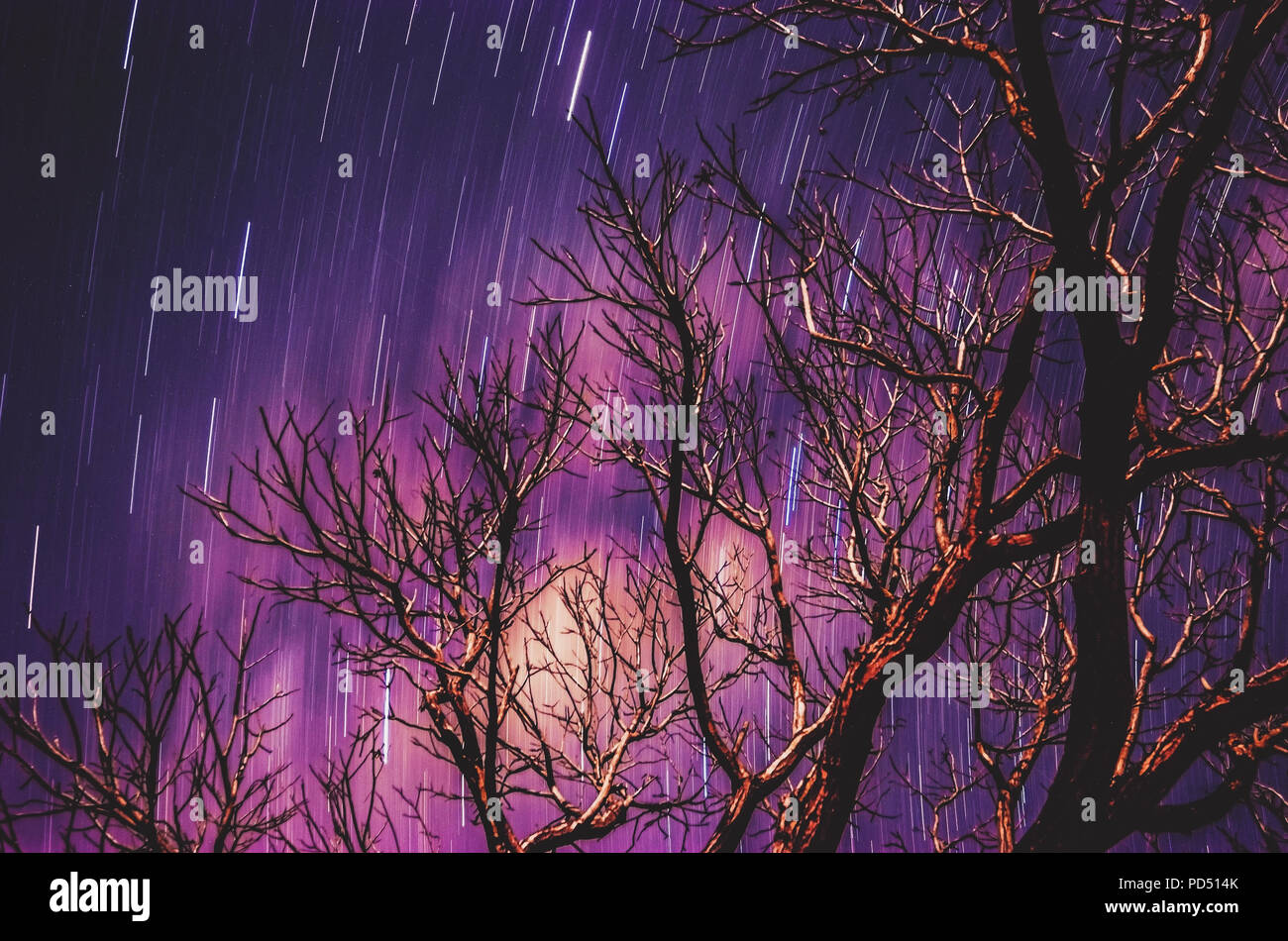 Stars traces on a long exposure photo of the sky at night and a soft blurred tree branches silhouette on foreground. Purple tones sky. - Stock Image