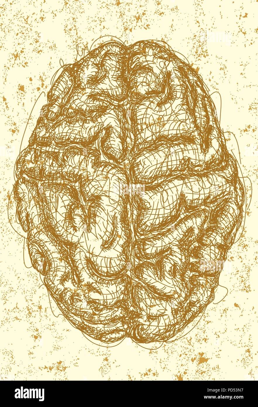 Brain . A sketch of the top view of a brain over an abstract background. - Stock Image