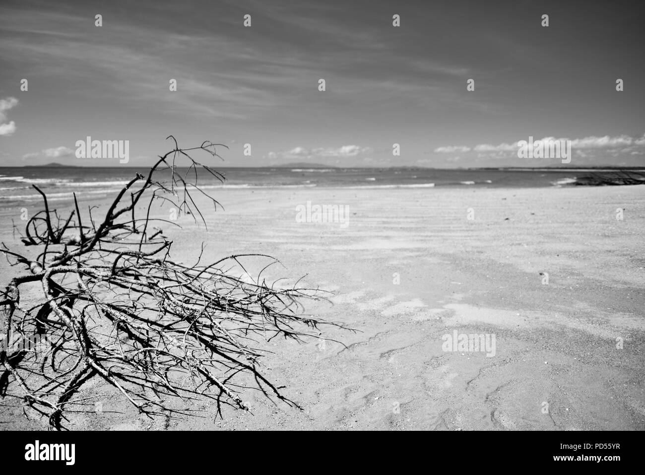 Dead trees on a beach a sign of things to come with global warming, Toomulla QLD, Australia - Stock Image