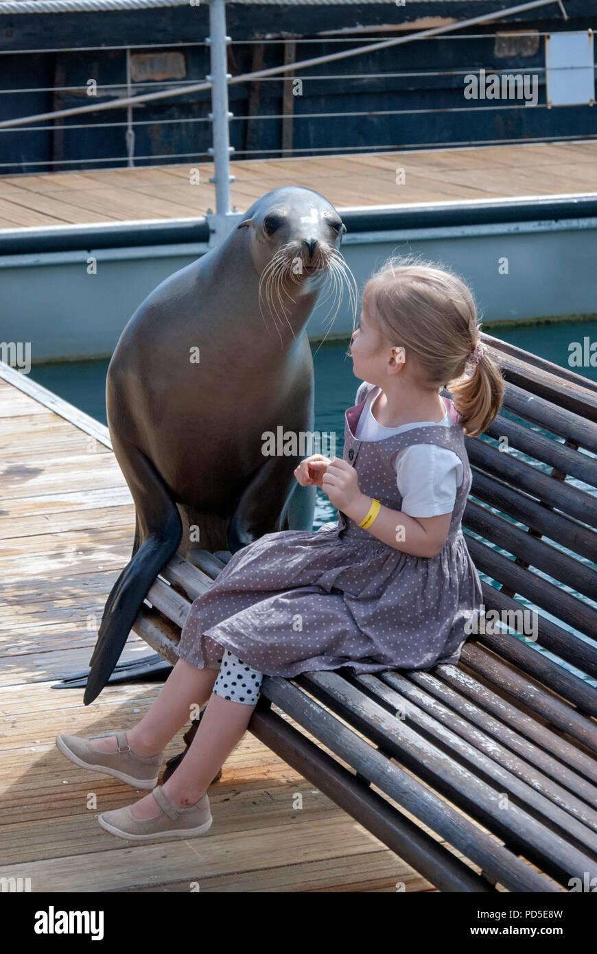 Young Blonde Haired Girl Posing with California Sea Lion female child sitting bench coastal eared seal aquarium caleta de fuste fuerteventura canary i - Stock Image