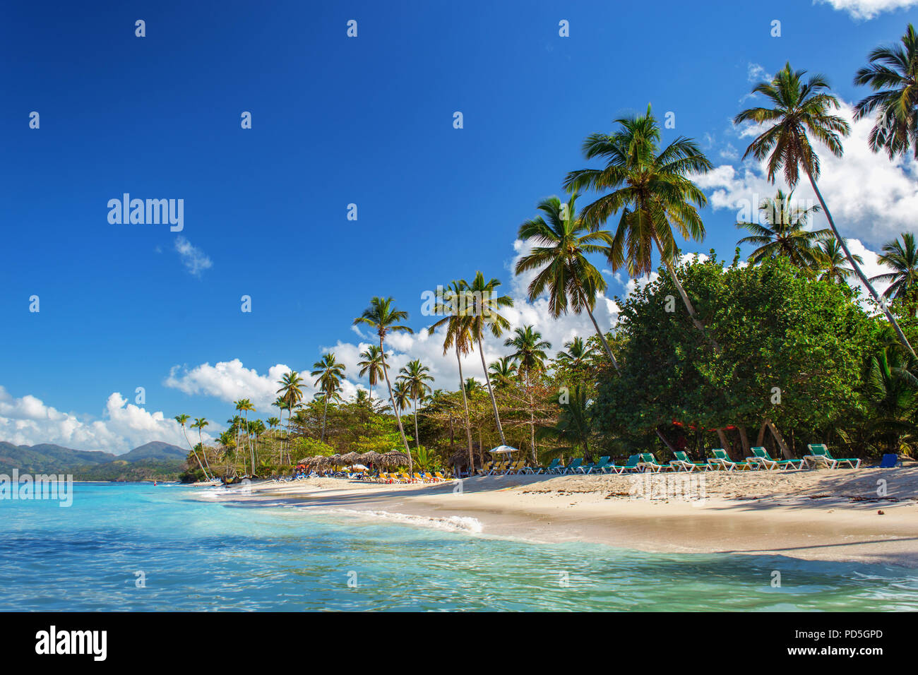 perfect empty Caribbean tropical sandy beach with clear water and green palm trees Stock Photo