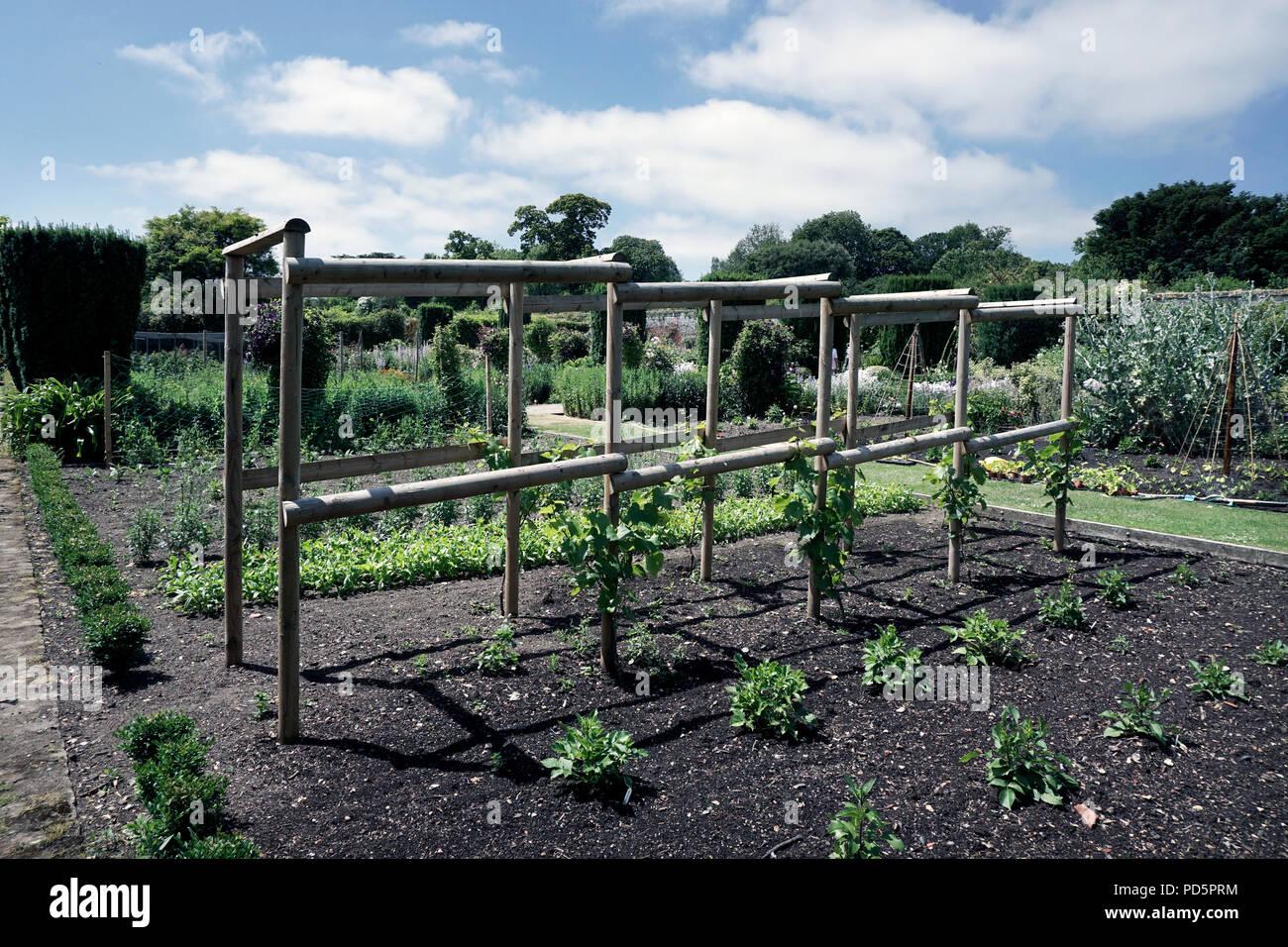 Grape Vine Garden Wooden Support Frame Stock Photo 214642616 Alamy