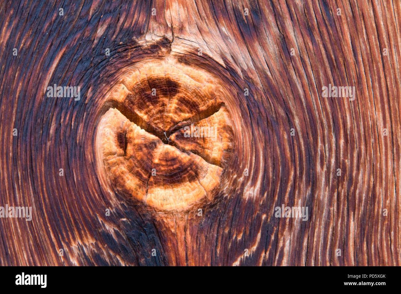 Barn wood knot, Juniper Hills Preserve, Oregon - Stock Image