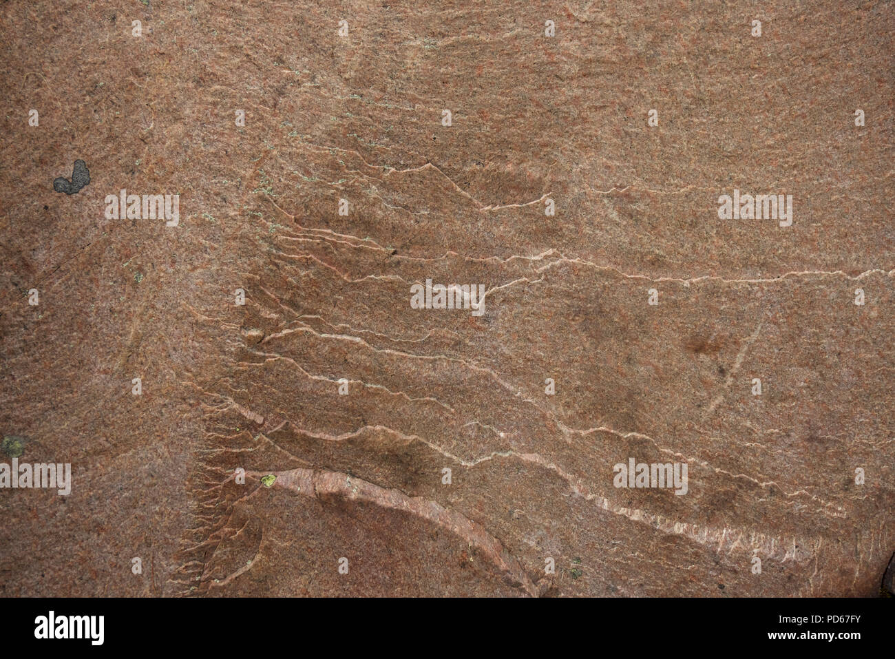 Pink granite of the Canadian Shield, typical of the bedrock in Killarney Park, Ontario. - Stock Image