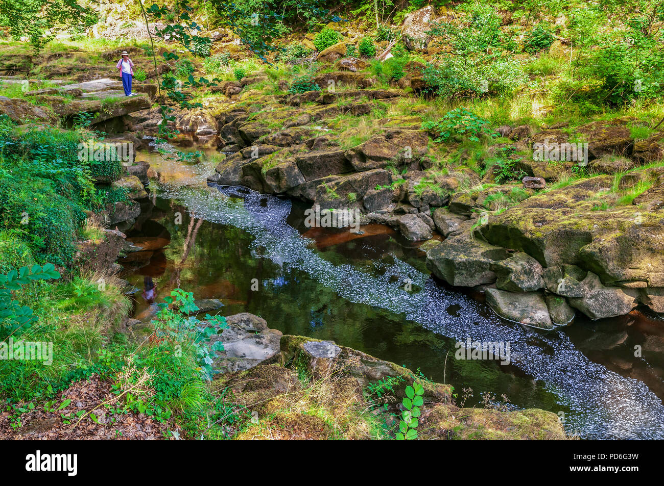 Bolton Abbey. West Yorkshire. River Wharfe. The Strid waterfall. Strid Wood. - Stock Image