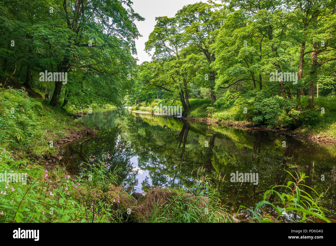 Bolton Abbey. West Yorkshire. River Wharfe. - Stock Image