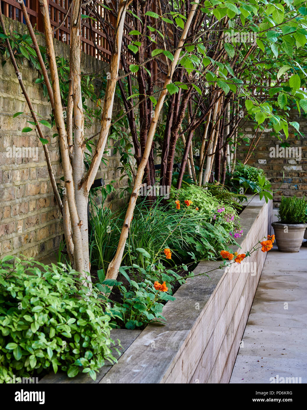 Raised flowerbeds in courtyard garden of Victorian London home - Stock Image