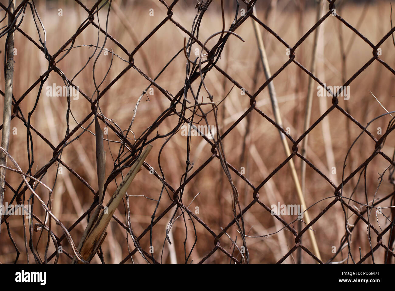 Metal wire grid fence with dry brown grass on background - Stock Image
