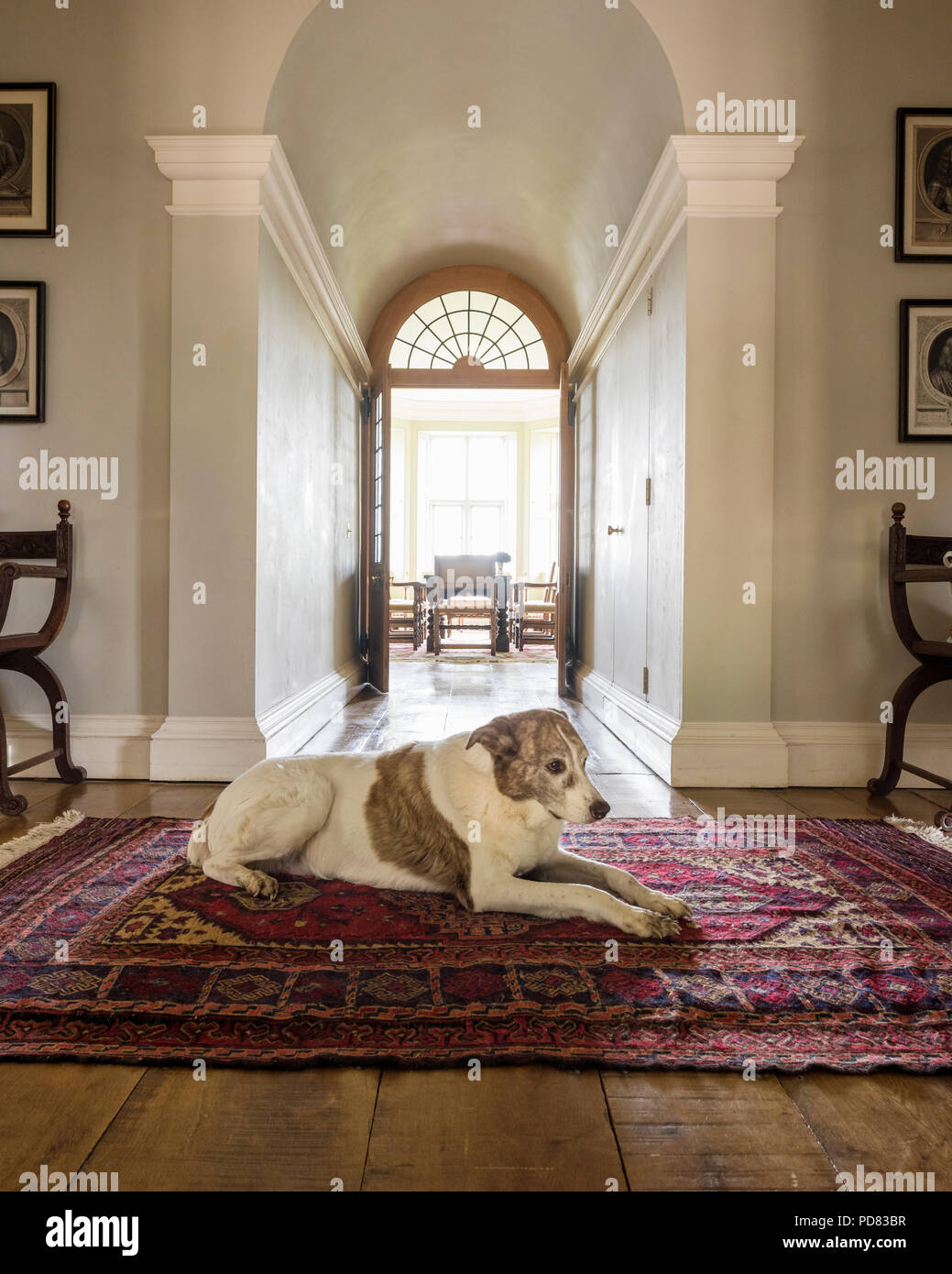 A dog lies on an antique rug in hall leading through to dining room with double doors Stock Photo
