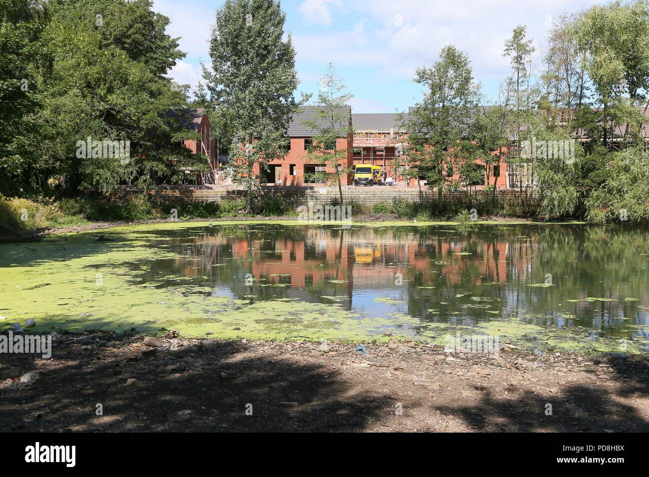 Smethwick, West Midlands, UK. 8th August, 2018. A pool has been closed to the public as up to 45 birds, mainly Canada geese, have died in recent weeks after bacteria developed in a pool in Victoria Park, Smethwick, near Birmingham, due to the recent hot weather. A spokesman for the RSPCA suspects the birds died after contracting avian botulism. Peter Lopeman/Alamy Live News - Stock Image
