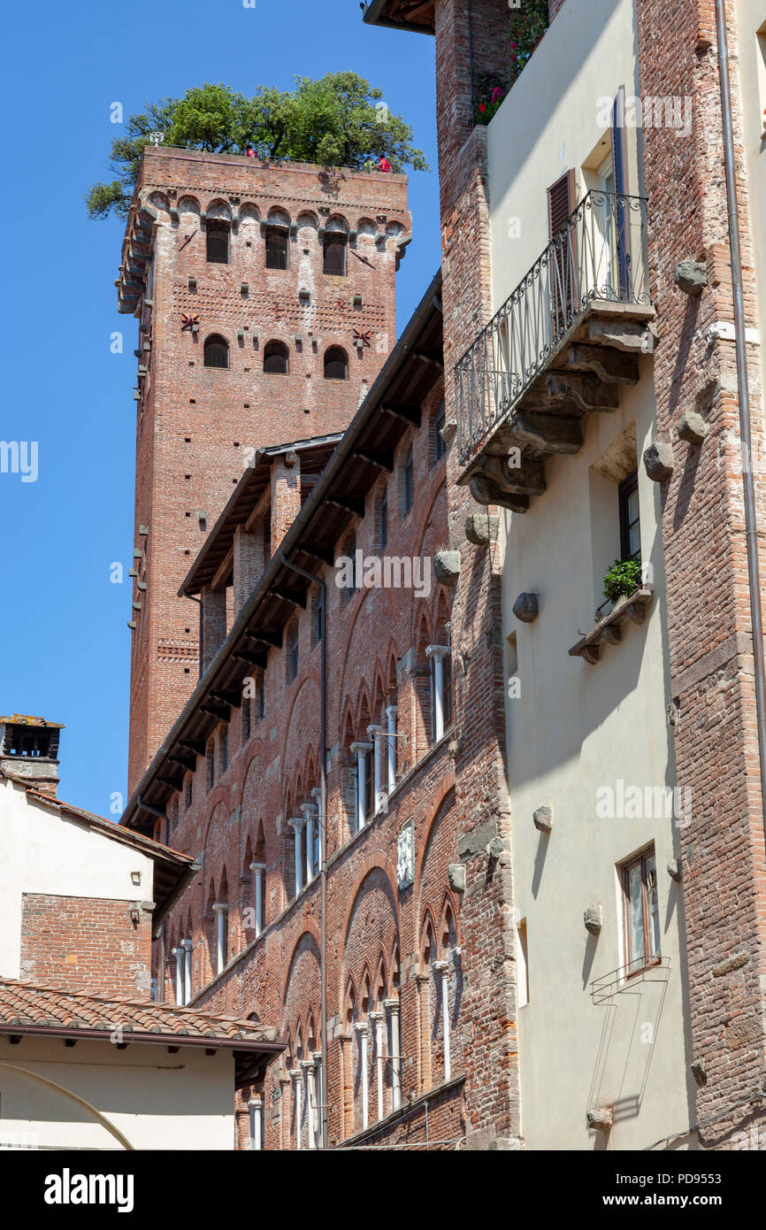 The Guinigi tower (134.48 ft high) at Lucca (Tuscany - Italy). Brick-built, it dates back from century XIV. - Stock Image
