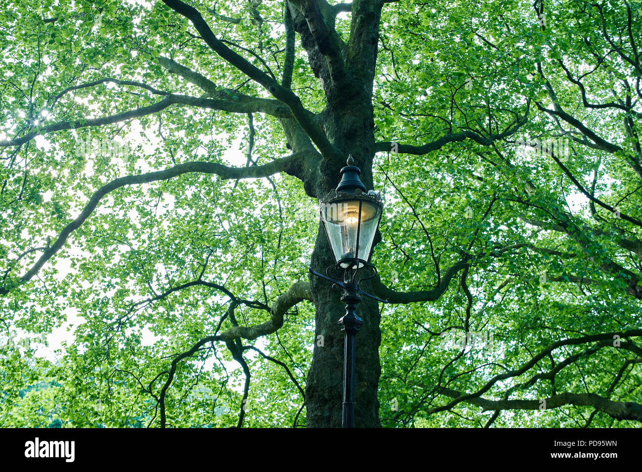 lamp light in a London park - Stock Image