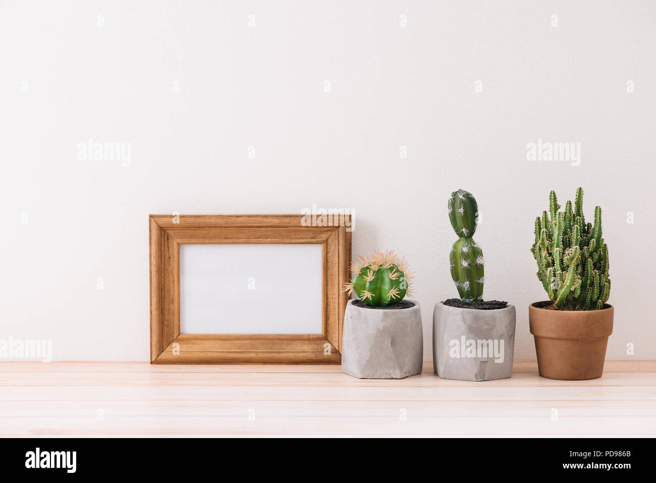 Modern room decoration. Various cactus and succulent plants in ...