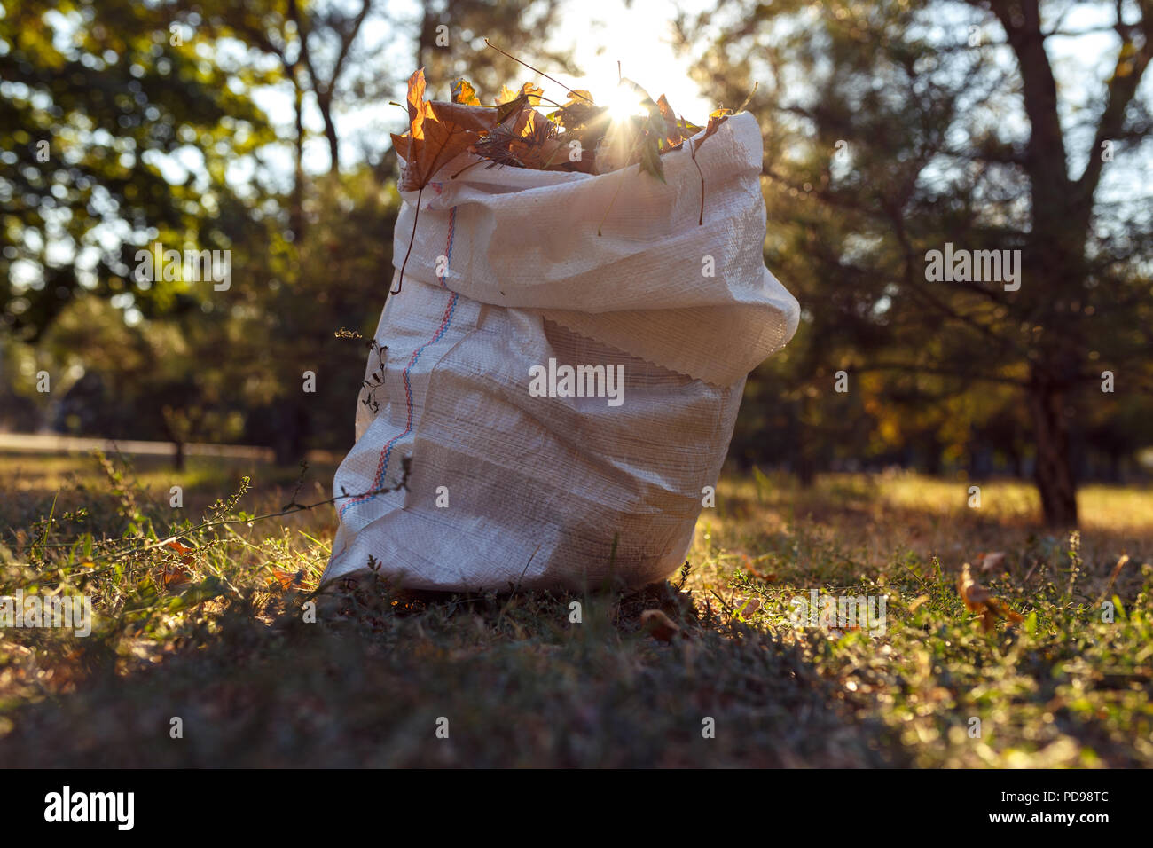 young boy collects fallen leaves in autumn otdoor - Stock Image