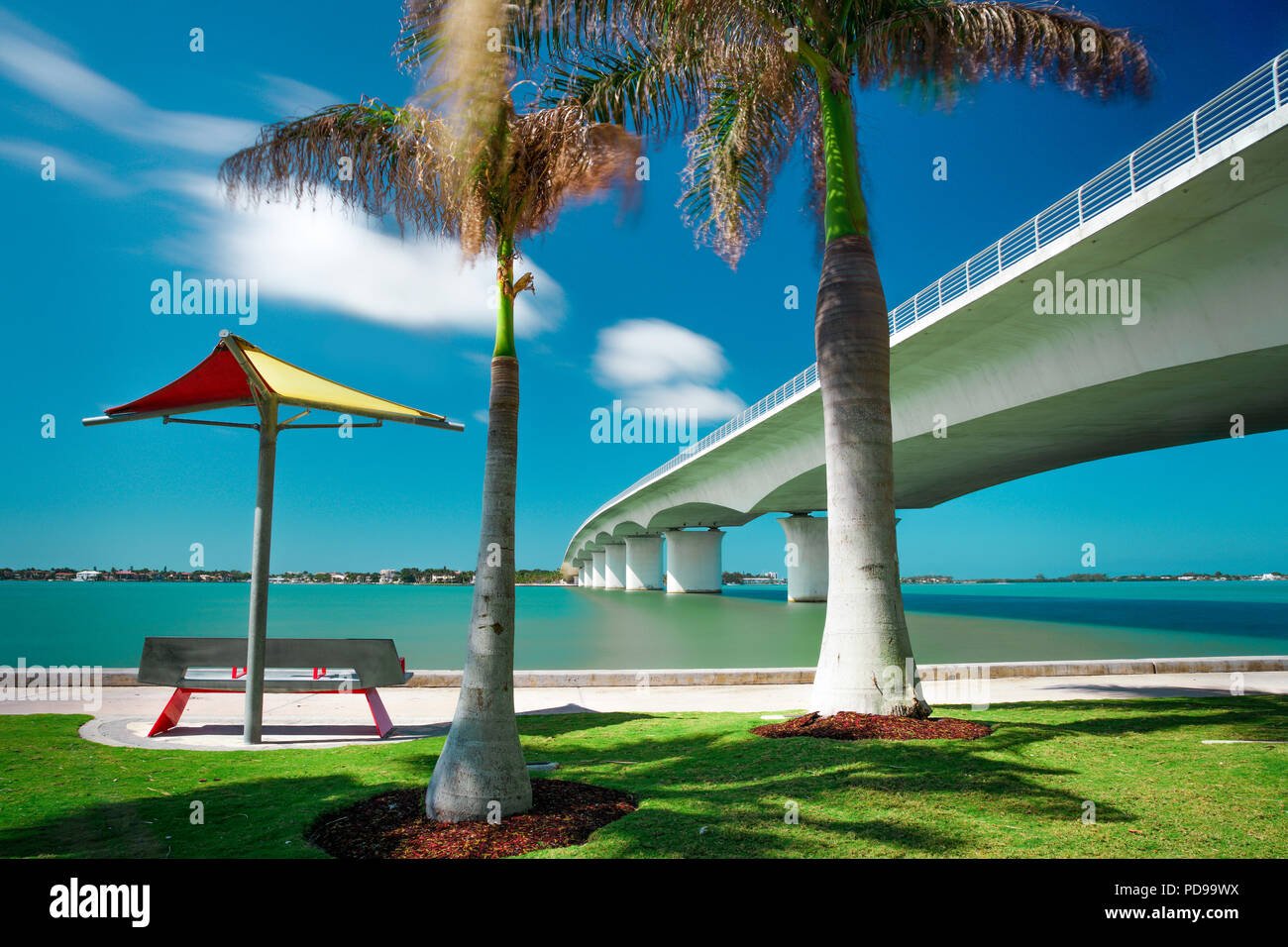 Summer palm tree, John Ringling Causeway at Eloise Werlin Park, Sarasota Florida - Stock Image