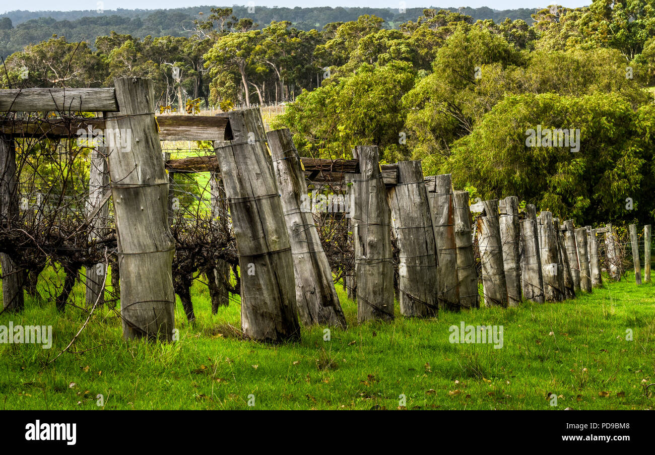 Vineyard, Margaret River, western Australia Stock Photo