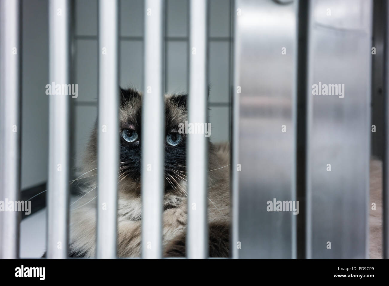 Cat waiting for treatment in cage of veterinarian clinic - Stock Image