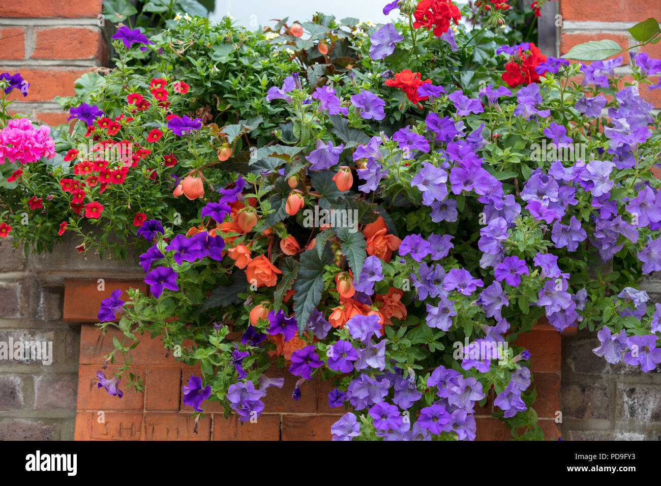 Window box with summer flowers and plants in Hampstead, London, UK - Stock Image