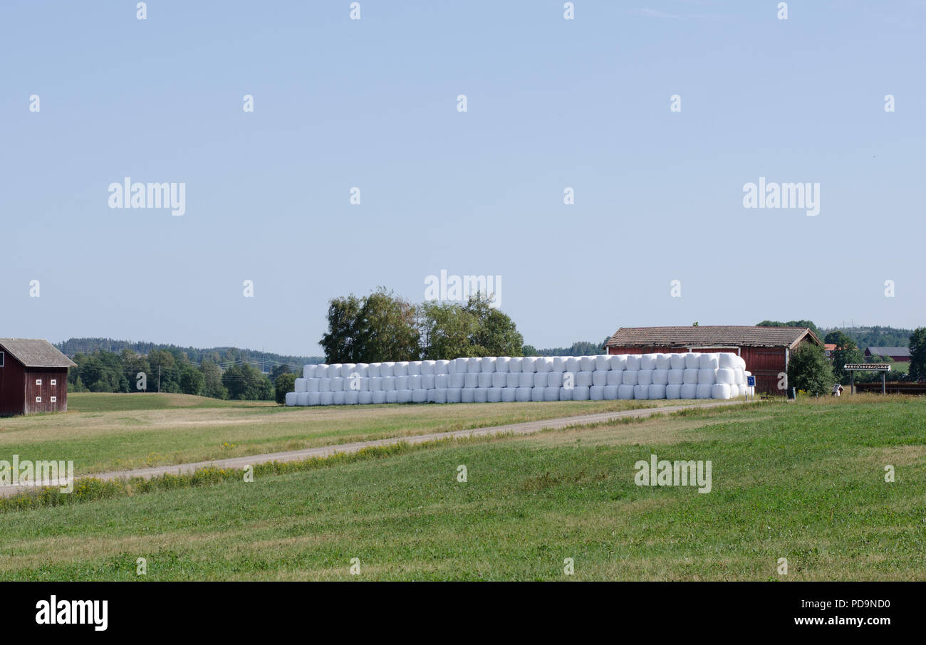 Ensilage packed on top of each other on a field in northern Sweden - Stock Image
