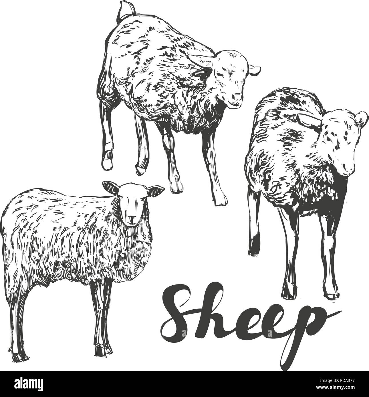 Hand Drawn Sheep Stock Photos & Hand Drawn Sheep Stock Images - Alamy