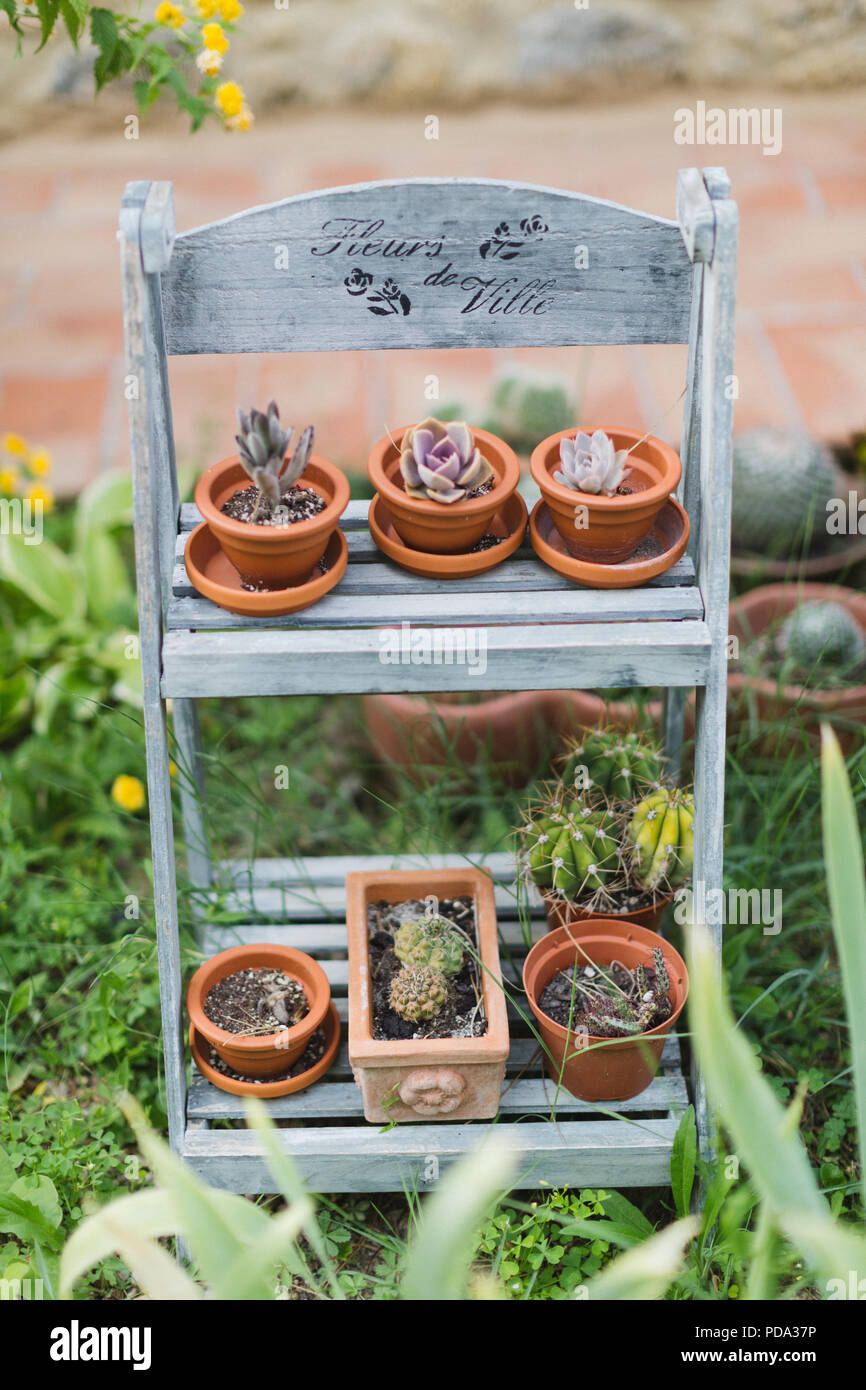 Succulents and cacti on shelves outdoors in an Italian garden - Stock Image