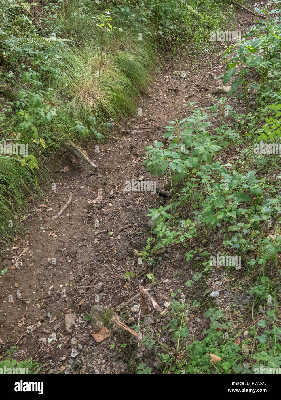 Dry drainage ditch beside field, taken during 2018 heatwave. Stock Photo