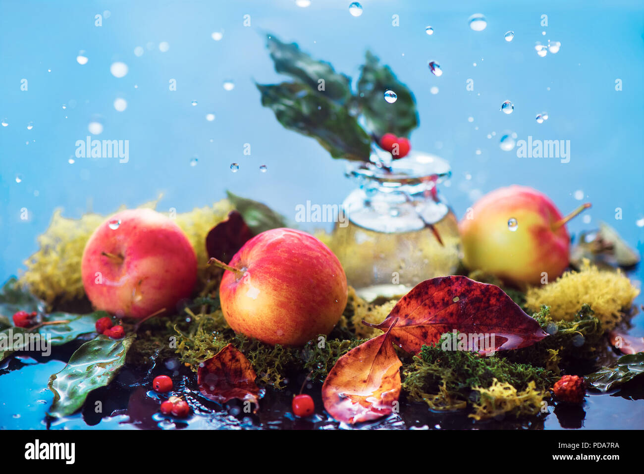 Autumn apples still life. Fall harvest header under the rain with water drops and copy space. Red small organic ranet apples with a glass jar and fallen leaves - Stock Image