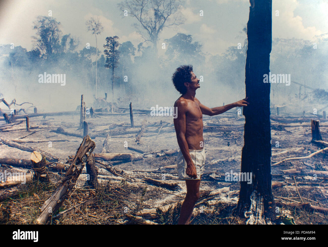 Logging, Amazon deforestation, slashed-and-burned patch of forest at Acre State, Brazil. - Stock Image