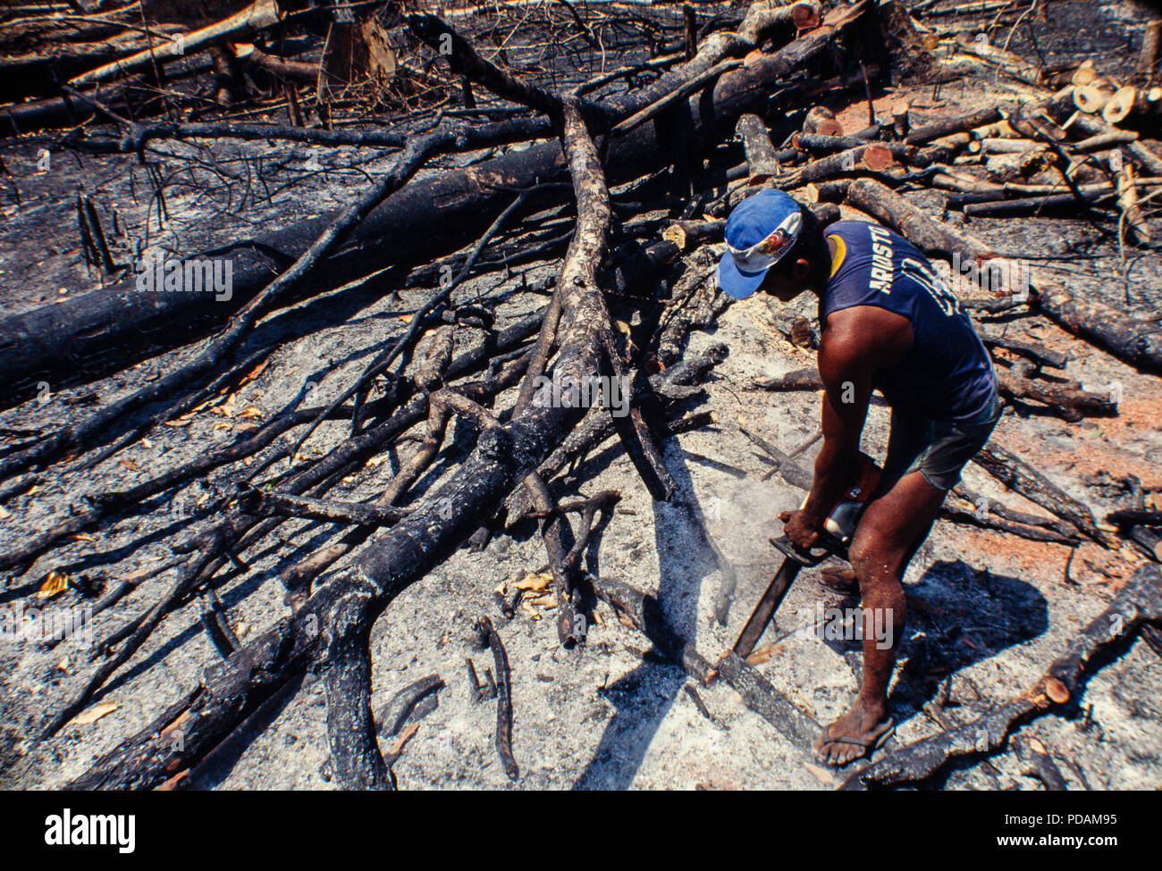 Logging, Amazon rainforest clearance, workers cut down trees using chainsaw in a slashed-and-burned patch of forest. Acre State, Brazil. - Stock Image