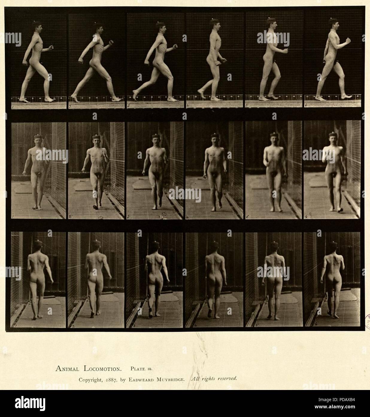 Animal locomotion. Plate 10 Stock Photo