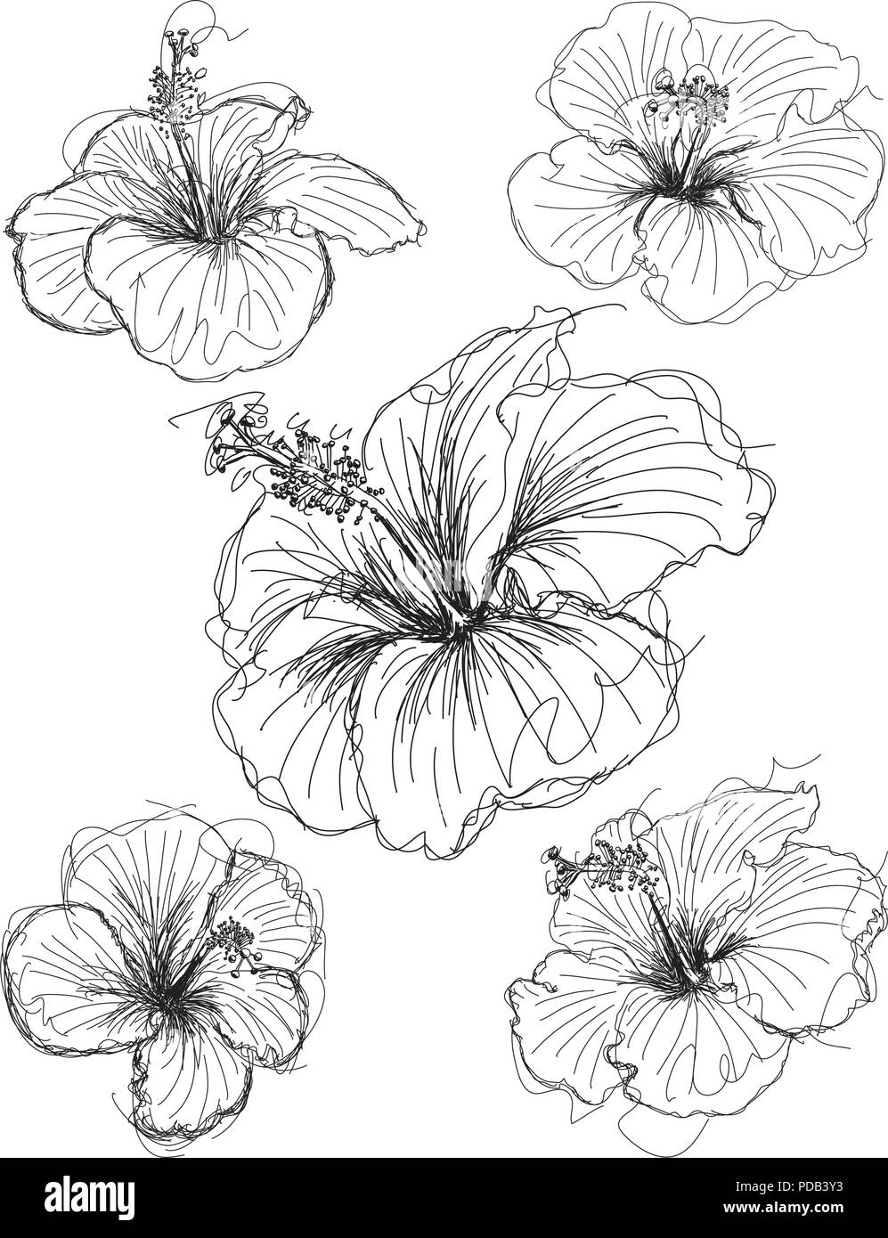 hibiscus flower sketches hand drawn hibiscus flower sketches stock