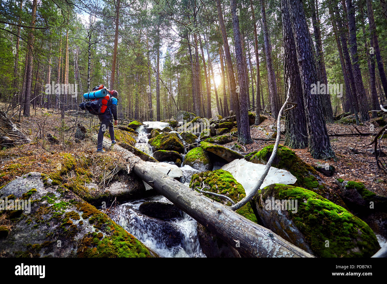 Hiker in with big backpack walking to the beautiful forest in Karkaraly national park in Central Kazakhstan - Stock Image