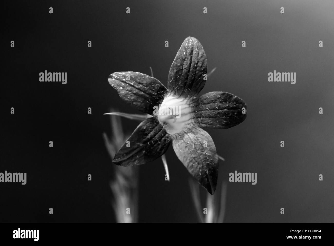 Orchid Flower Black And White Stock Photos Images Alamy