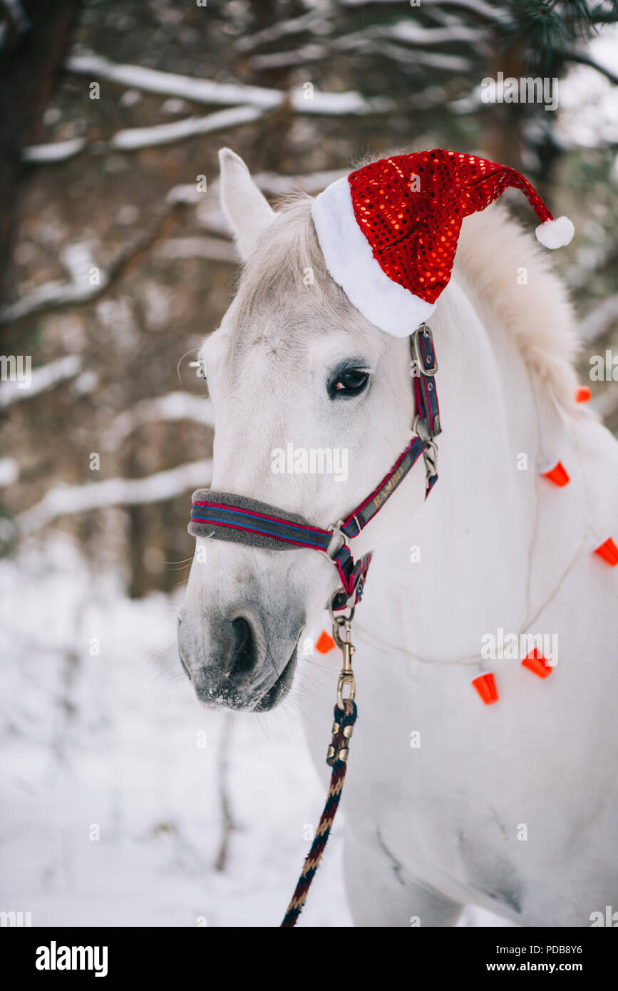 Adorable Festive White Horse Wearing Christmas Hat Standing In The Snowy Winter Forest Stock Photo Alamy