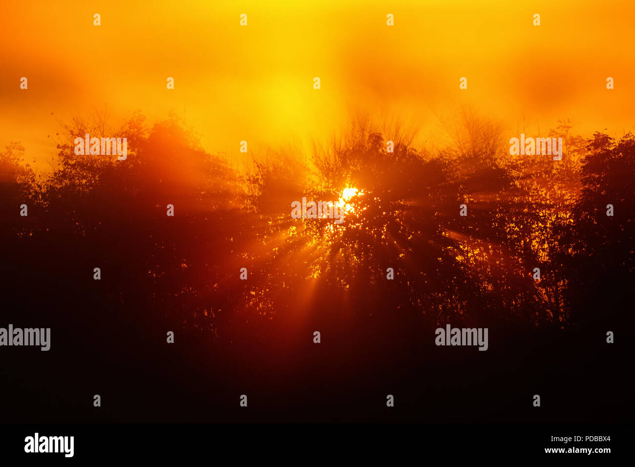 Sunrise with sun rays through the trees in fog - Stock Image