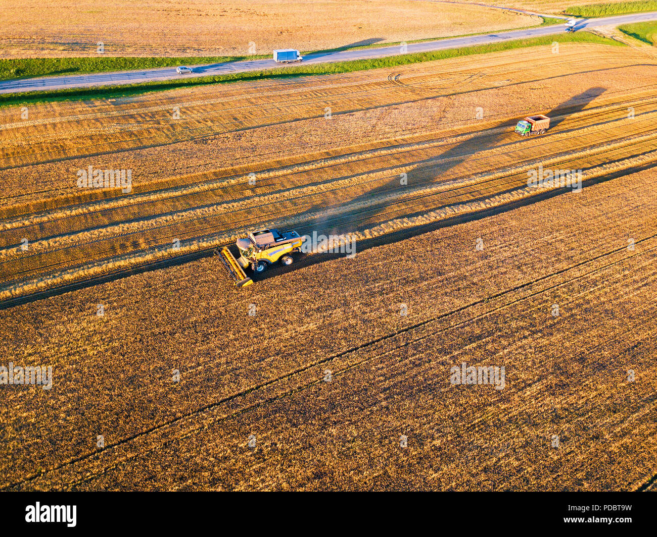 Harvester machine working in field. Combine machine harvesting agriculture golden ripe wheat field. Aerial view on the combine working on large rye fi - Stock Image