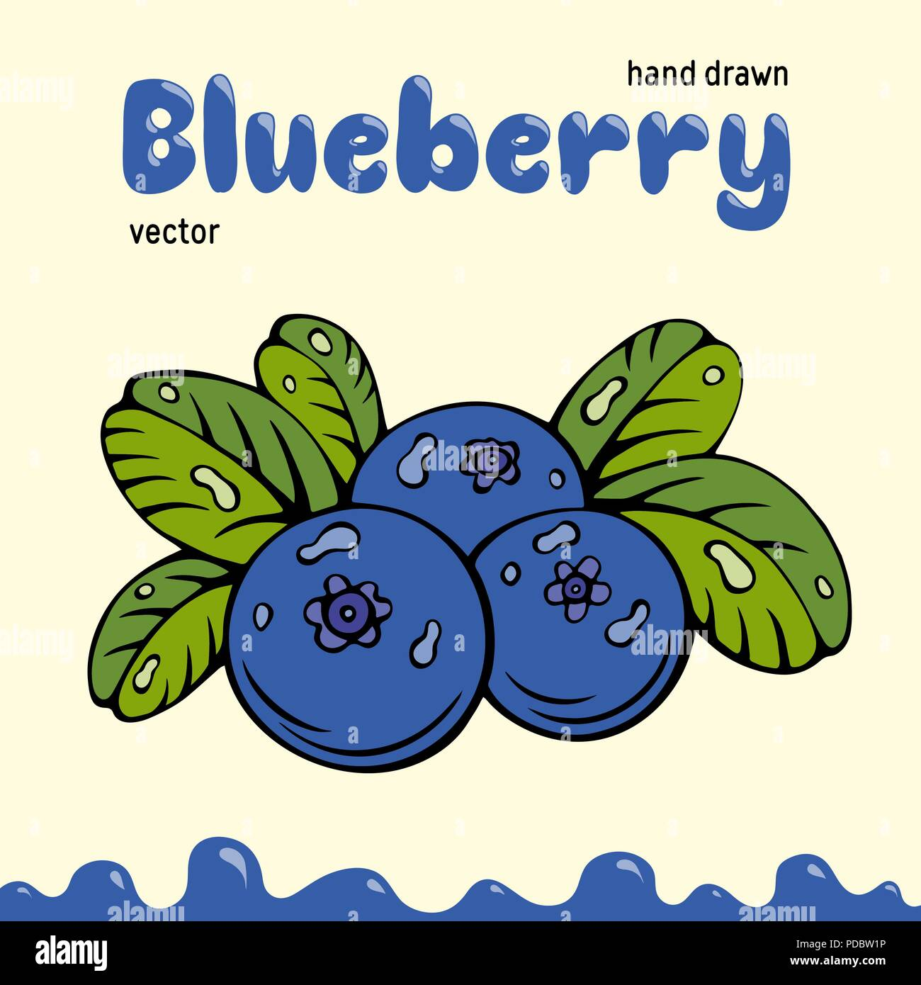 Blueberry vector illustration, berries images. Doodle Blueberry vector illustration in blue and green color. Blueberry berries images for menu, package design. Vector berries images of blueberry - Stock Vector