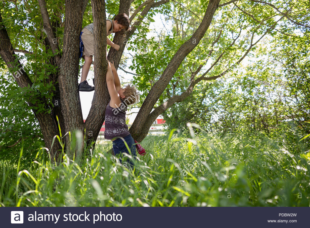 Brothers climbing lush green tree - Stock Image