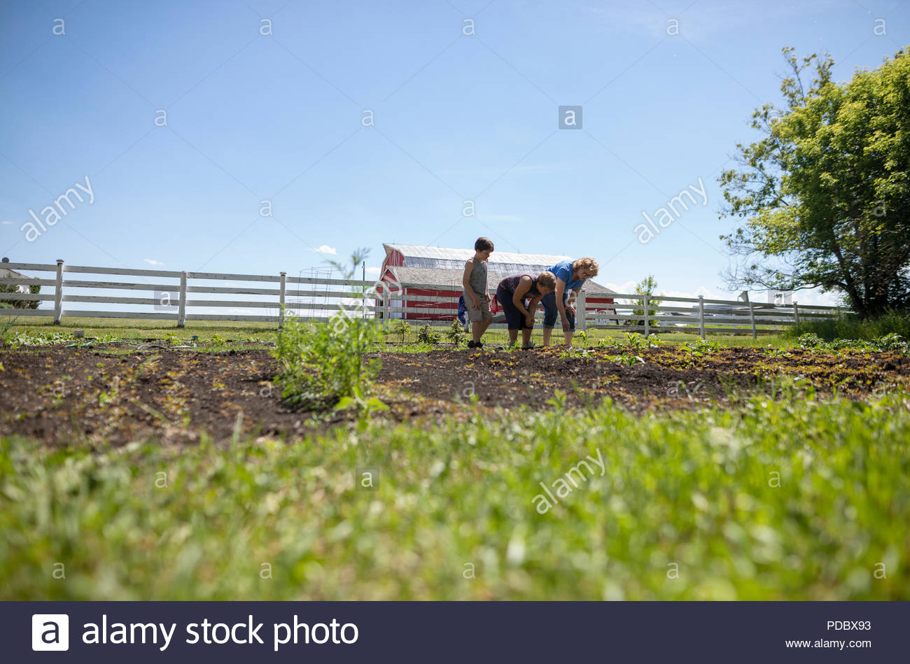 Grandmother and grandsons gardening on sunny rural farm - Stock Image