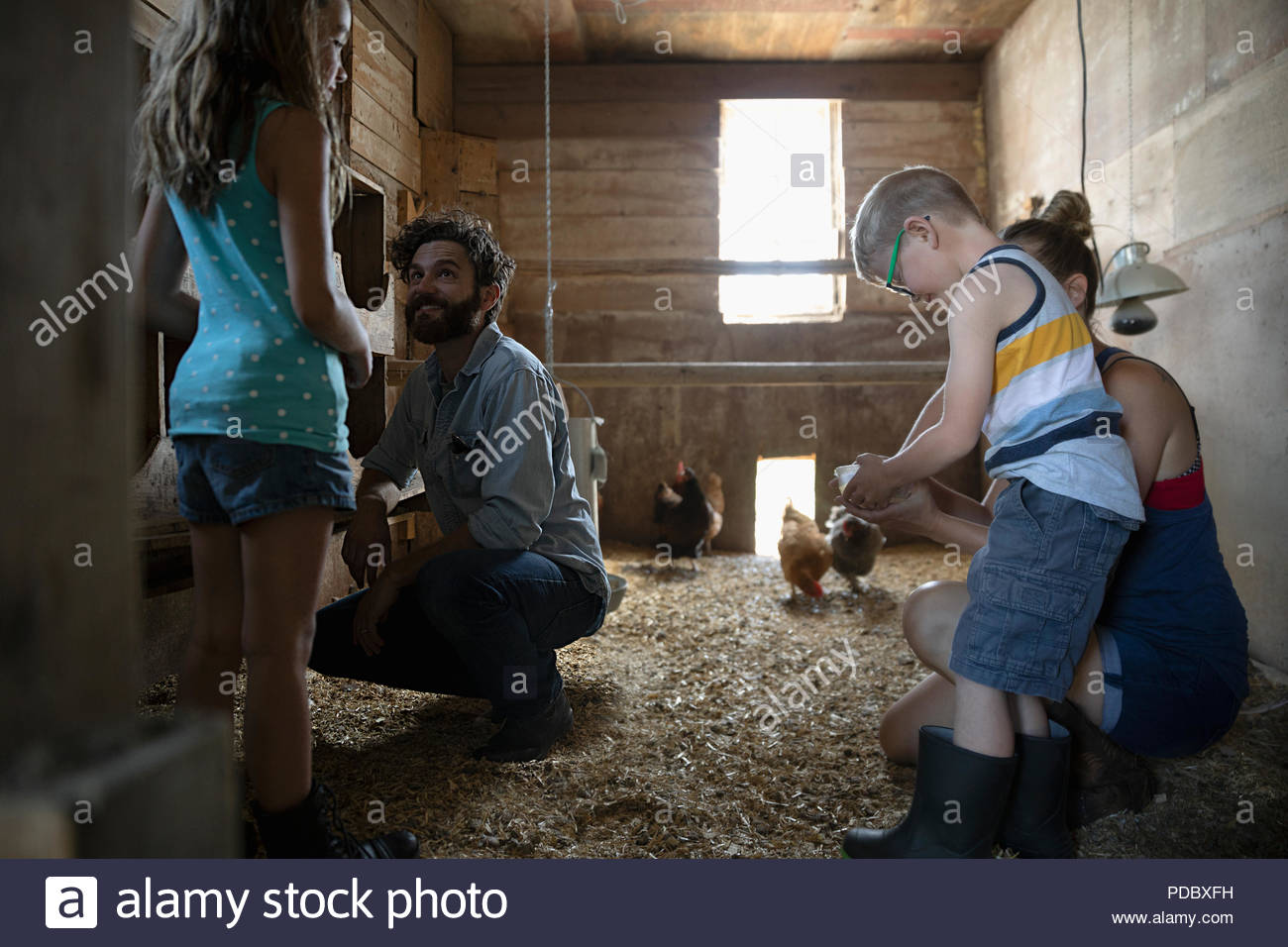 Family feeding chickens in barn - Stock Image