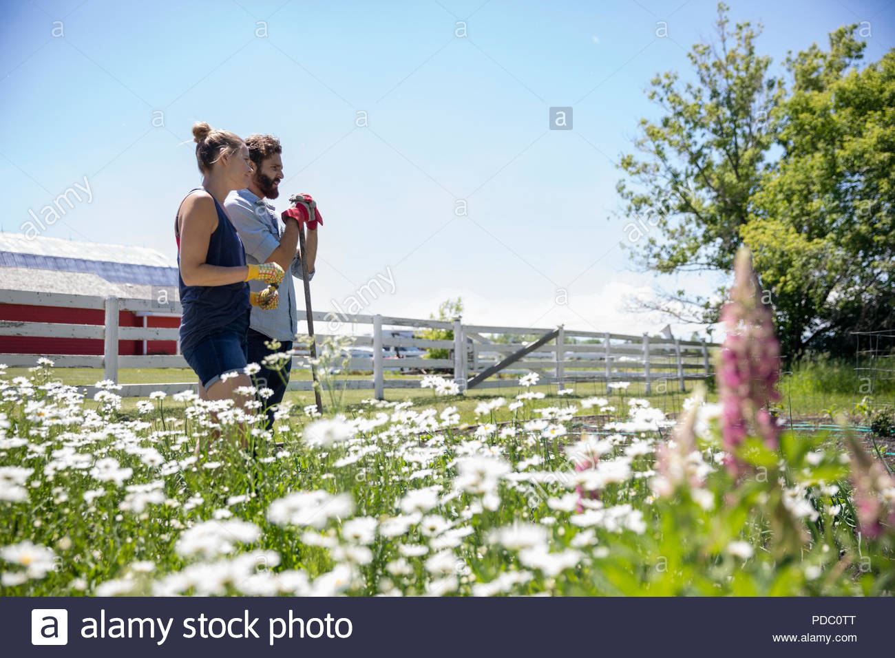Couple gardening, standing in sunny rural garden - Stock Image