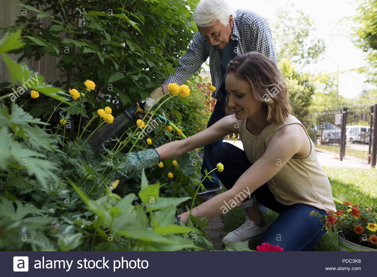 Senior father and daughter gardening - Stock Image