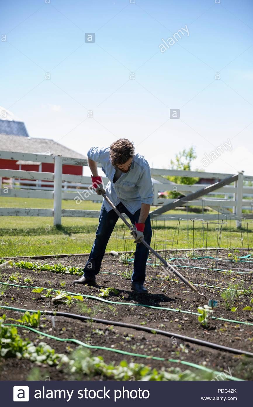 Man gardening, tending sunny rural garden - Stock Image